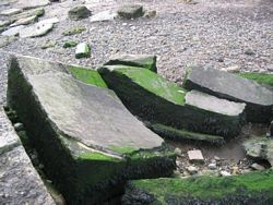 [Photo of Warden Point sound mirror remains 8 October 2005.]