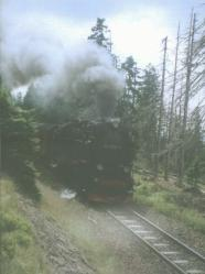 [Steam loco in trees]